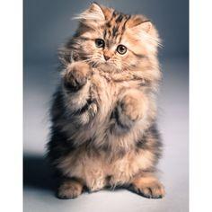 #cat #cats #catsagram #catstagram #instagood #kitten #kitty #kittens #pet #pets #animal #animals #petstagram #petsagram #photooftheday #catsofinstagram #ilovemycat #instagramcats #nature #catoftheday #lovecats #lovekittens #catlover #instacat