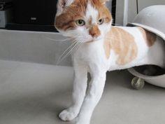 ある日のどんこ | どんころり Kittens And Puppies, Cats And Kittens, I Love Cats, Cute Cats, Paw Pad, Animals And Pets, Cute Animals, Soft Kitty Warm Kitty, Better Half