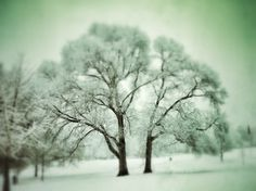 Snowy Piedmont Park, 2010.