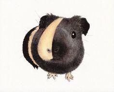 fat little guinea pig by wtfong, $15.00