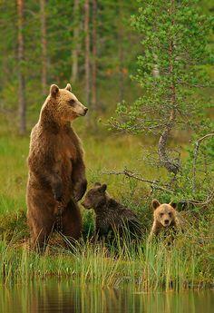 wildlifepreservation:  Help us preserve wildlife and visit our blog: Wildlife Preservation