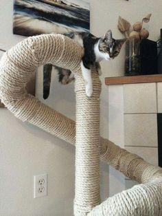 Cats Toys Ideas - Looks like its built with plumbing tubes then wrapped in sisal, you could also use coloured rope for some very pretty shapes - Ideal toys for small cats Cat Climber, Diy Cat Tree, Cat Trees Diy Easy, Wooden Cat Tree, Cat Towers, Cat Playground, Playground Design, Cat Enclosure, Cat Room