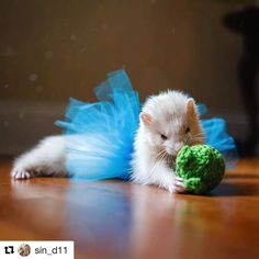 """85 Likes, 14 Comments - Brittany (@dooksandspoons) on Instagram: """"I love seeing ferrets in tutus. #Repost @sin_d11 (@get_repost) ・・・ For as sweet as Eevee is, she…"""""""