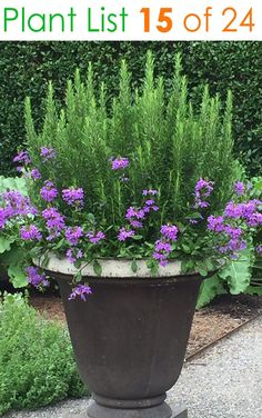 Spring Garden Pots and Planters Outdoor potted plants. Love this rosemary and verbenaOutdoor potted plants. Love this rosemary and verbena Container Flowers, Container Plants, Container Gardening, Plant Containers, Patio Containers Ideas, Plantas Do Texas, Spring Garden, Lawn And Garden, Gravel Garden