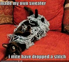 Are you looking for really funny black cat memes? Look no further, we've gathered funny black cat memes just for you to share on your social media accounts I Love Cats, Crazy Cats, Cute Cats, Funny Cats, Funny Animals, Cute Animals, Talking Animals, Knitting Humor, Crochet Humor