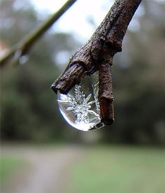 Ice Crystal. pretty sure its photoshoped, but still:)