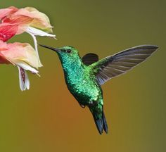 I used this photograph of a hummingbird as a guide for the shape of the body, wings, eye, and beak, and I used Illustrator's Dynamic Symbols feature to ...