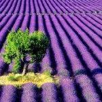 Exquisite nature images | Dusky's Wonders