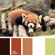 black and red-jinger, brown colour, colour of bamboo, colour of green tea, colour of greenery, colour of the small panda, colour solution for interior design, combination of colours for interior decor, green and white,