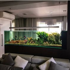 The best peninsula style planted aquarium we have ever seen! ----Photo from @luca_galarraga #aquarium #fishtank #plantedtank #green #fish