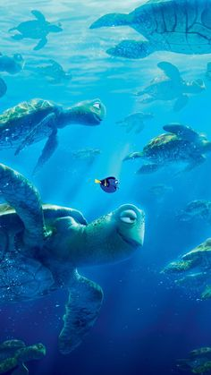 Return to the Main Poster Page for Finding Dory 6 Of 23 Disney Pixar, Disney E Dreamworks, Film Disney, Disney Animation, Disney Magic, Disney Art, Disney Movies, Nemo Wallpaper, Wallpaper Animes
