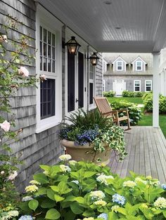Lush patio with a gray shingled home exterior, teak deck and blue hydrangeas all around.
