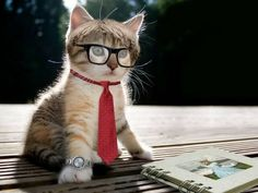 cats in glasses | animals,cats cats animals humor tie glasses funny kittens watches ...
