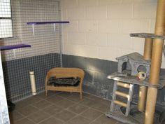 Foto's | Kattenhotel | Hof Ter Linden Tile Floor, Flooring, Pictures, Tile Flooring, Wood Flooring, Floor