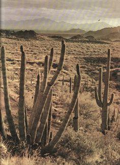 Cactus. Hobes. Camel.
