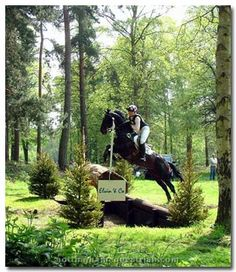 Cross country (eventing) through forest at portion 15