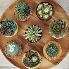 Little deserts! These cupcakes have sandy hues and cacti you'd find in the desert