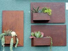 Wall plants for outside