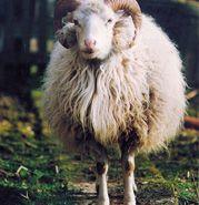 Bouwen met hout en isoleren met wol?!