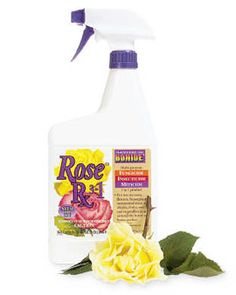 I swear by this for my roses, it keeps the black spot at bay, wards off the bugs and is cost effective. I start using it mid June before the humidity kicks in Ohio