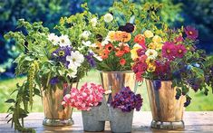 Grow flowers for cutting - lots of good ideas here...
