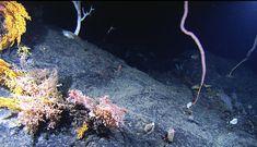 Seamounts, A Deep-Sea Habitat | Ocean Portal | Smithsonian