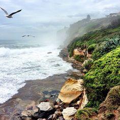 Dee Why Beach #Sydney #Australia