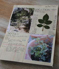 Field notes for a rose journal