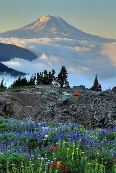 Wildflowers, backpackers' tents, Mt. Adams - what a campsite!