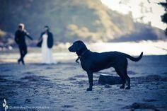 www.darshanphotography.com Vancouver Island, Wedding Photography, Ocean, River, Teaching, Weddings, Pets, Wedding, The Ocean