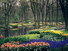 Keukenhof (The Garden of Europe), in Lisse, Holland, The Netherlands Most Beautiful Gardens, Beautiful World, Beautiful Places, Beautiful Beautiful, Absolutely Gorgeous, Wallpapers Flowers, Great Places, Places To See, Amazing Places