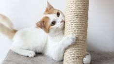 How To Stop Cats From Scratching Furniture Furniture Scratches, Cat Furniture, Feral Cats, Cat Breeds, Pet Care, Mammals, Animals And Pets, Cute Cats, Cute Pictures