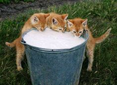 Wow! We are so thirsty and hungry.....