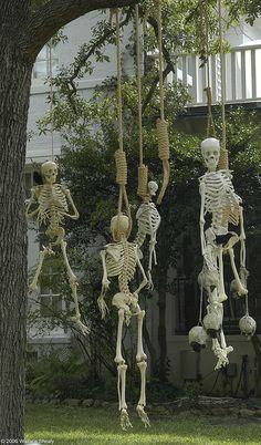 Posed skeletons #halloweendecorations #posableskeletons #halloweenyarddecorations #skellies #skeletons