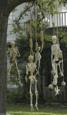 Samain:  Outdoor skeleton decor, for #Samain.