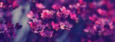 Facebook Timeline Cover  Flowers - Violet Purple