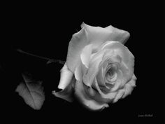 images of rest in peace   rest-in-peace-donna-blackhall.jpg