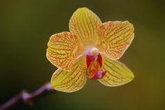 https://flic.kr/p/6HHRAq   Orchid