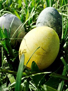 Easter is just around the corner! We're celebrating with tea dyed eggs.