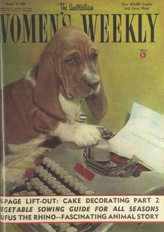 Giving those Mad Men secretaries a run for their money is this adorable little Basset Hound called 'Brown Owl'. I wonder what her typing speed is? ;) | The Australian Women's Weekly, 18 August 1965.