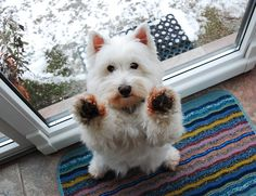 clean my paws!!