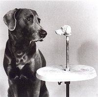 William Wegman   - Man Ray Contemplating the Bust of Man Ray