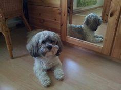 Hunde Foto: Marlis und Rudi - Sooo lieb! Hier Dein Bild hochladen: http://ichliebehunde.com/hund-des-tages  #hund #hunde #hundebild #hundebilder #dog #dogs #dogfun  #dogpic #dogpictures