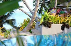 Beachfront dining Cook Islands, Nautilus, Dining, Plants, Inspiration, Biblical Inspiration, Food, Plant, Inspirational