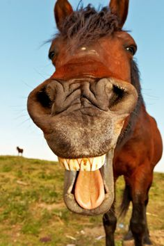 Importance of Proper Dental Care -- Great information, and this picture is laugh out loud hilarious! #LOL #HorseCare | equinewellnessmagazine.com
