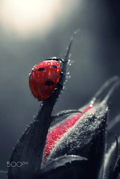 """""""Red and drops"""" by @MakisBitos"""
