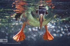 So sorry by hellorenzen #underwater #500px