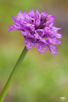 Livraisons de fleurs pas cher 027 fleurs bouquet for Envoyer fleurs par internet