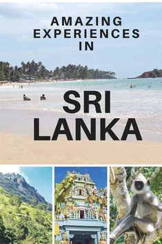 beautiful places in sri lanka culture travel Sri Lanka is a diverse and fascinating destination with rich flora, fauna and culture. Places To Travel, Travel Destinations, Places To Visit, Flora Und Fauna, Capitol Reef National Park, Train Rides, Packing Tips For Travel, Train Travel, Culture Travel