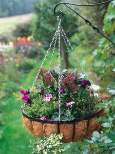 Colorful Flowers in Hanging Basket